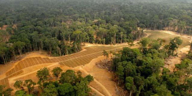 Des champs transformés en plantations de palmiers à huile à Kango, au Gabon - © AFP