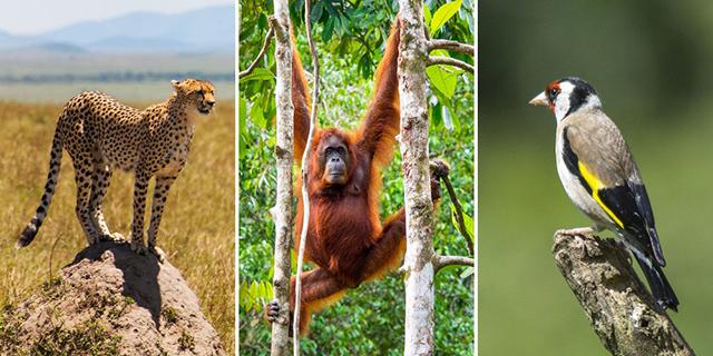 Risque d'extinction de près de 50% de la population animale en Afrique. © D.R.